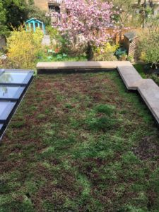 Green roof at 35 Outram Road